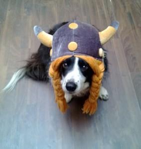 Molly Dog